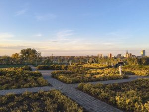 Sunset over the beautiful rooftop gardens at the University of Warsaw Library