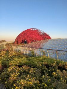 The rooftop of the University of Warsaw Library hides secrets perfect to explore in the Spring