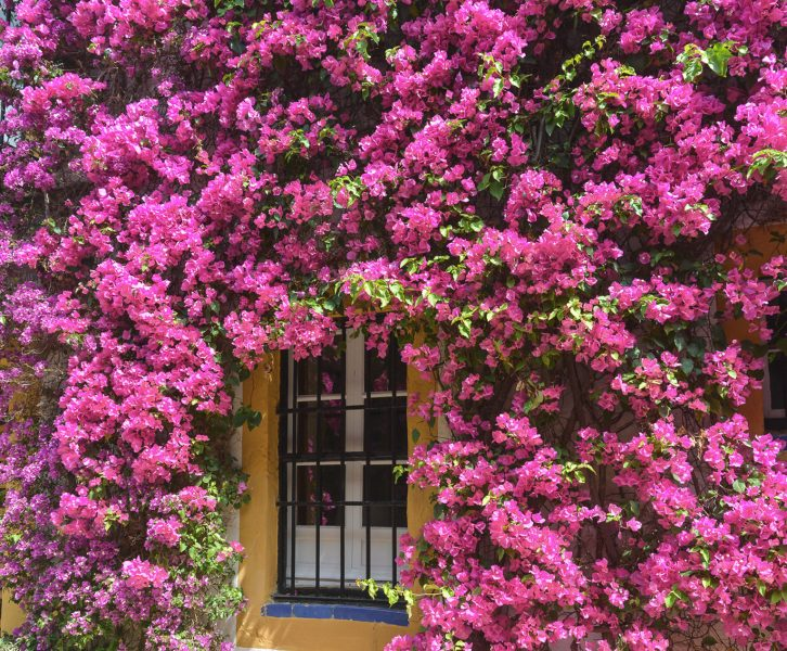 Spring travel in Seville is a dream as the city turns into a garden filled with beautiful flowers