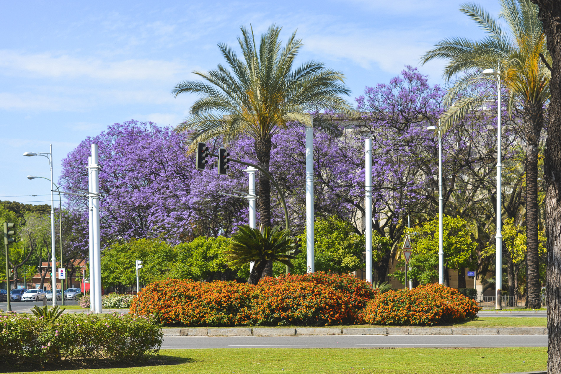 Flowers are one of the main Seville attractions specially in the Spring