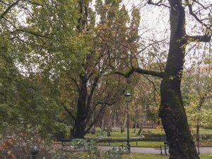 Autumn in a Beautiful Park in Krakow Poland