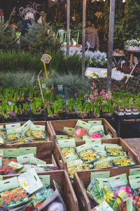The Albert Cup market has many souvenirs on offer including typical Danish tulips and seeds