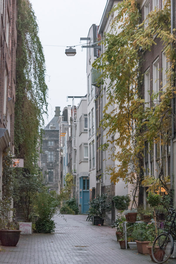A small street in Amsterdam filled with green plants