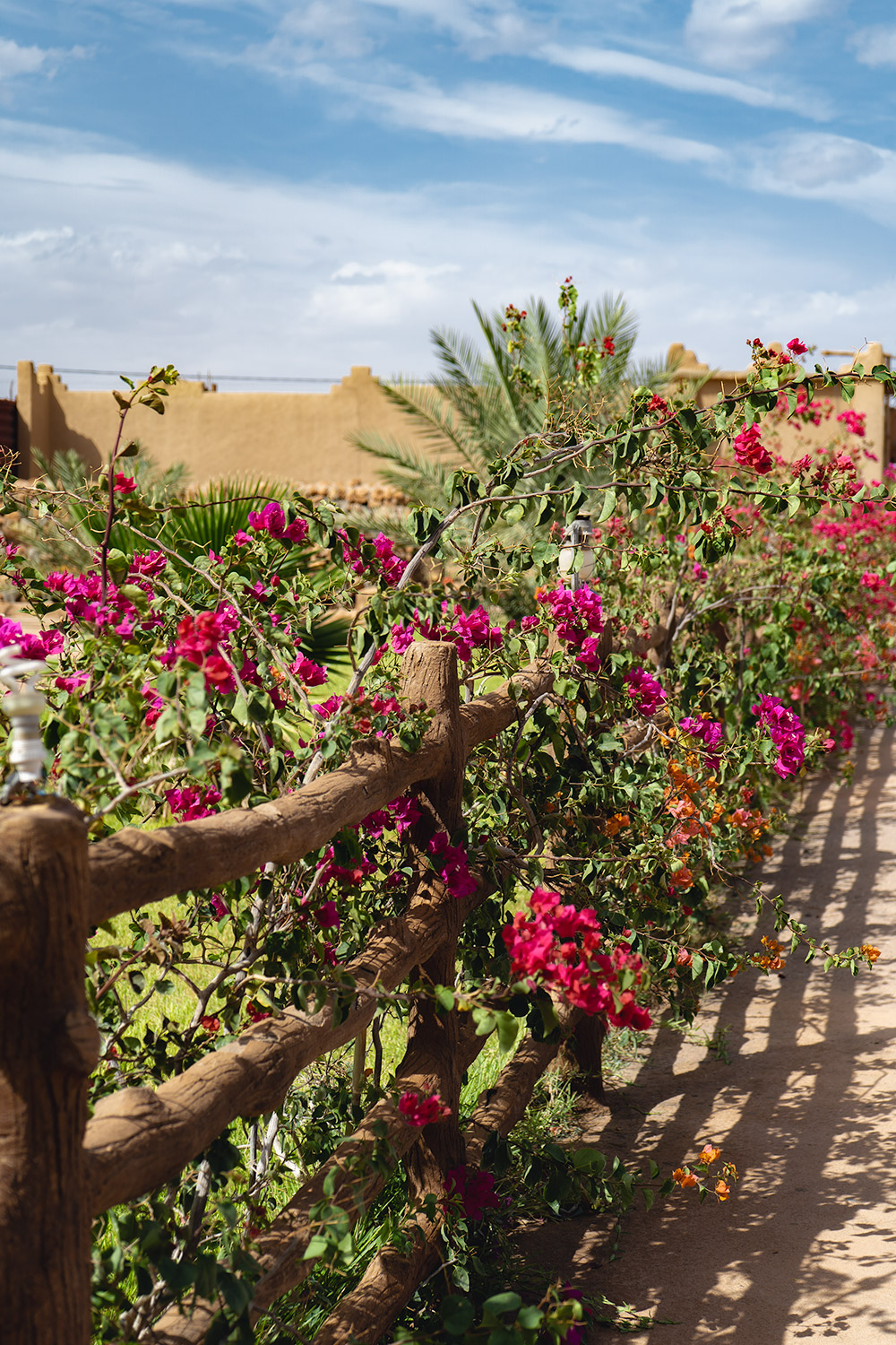Pink flowers along the road to the desert in Morocco