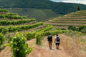 Hiking the Douro Valley allows you to appreciate this region fully