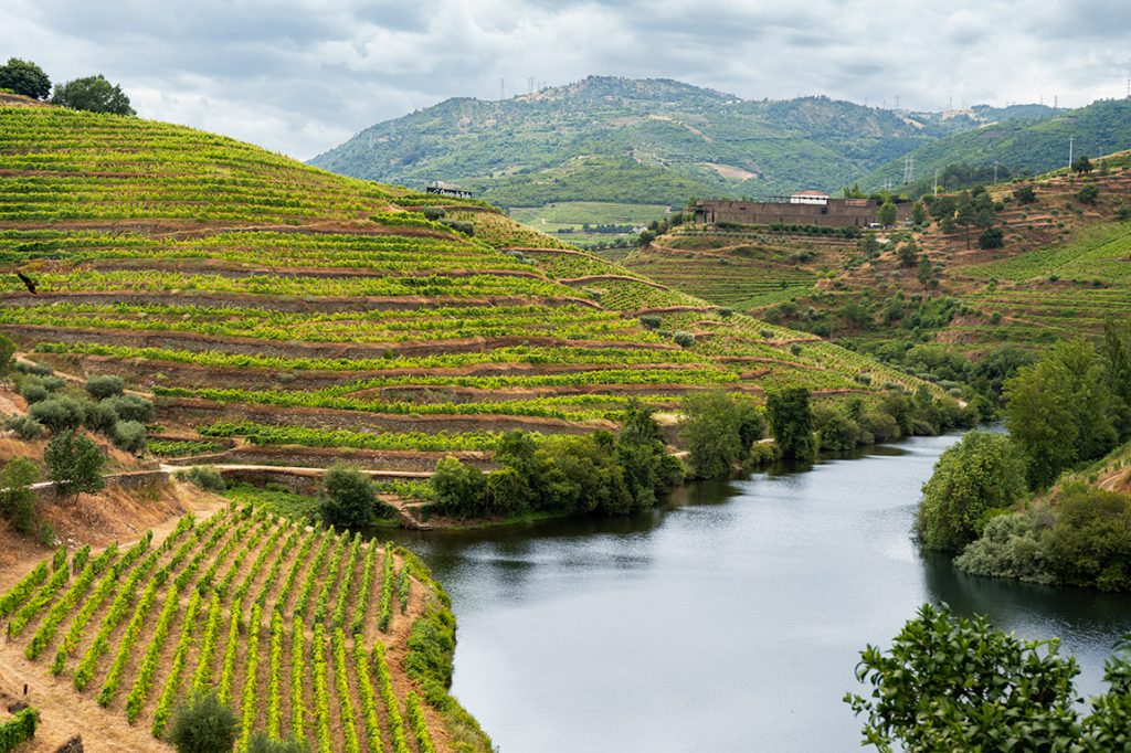 Quinta do Tedo has implemented organic practices for wine production
