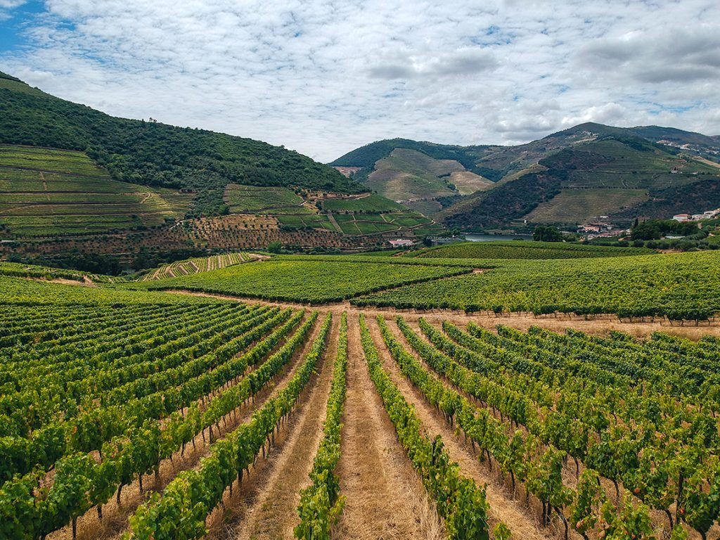 The wine terraces of the Douro Valley are mesmerizing